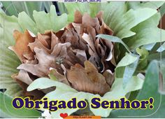 Obrigado Senhor! Philosophy, Vegetables, Thank You Lord, Veggies, Vegetable Recipes, Philosophy Books