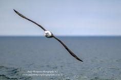 Bald Eagle, Photography, Animals, Photograph, Animales, Animaux, Fotografie, Photoshoot, Animal