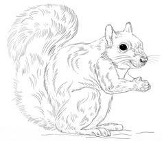 52 Best Squirrels To Color Images Coloring Books Coloring Pages