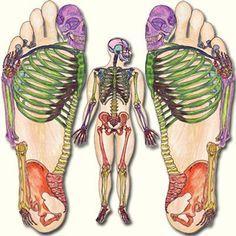 I remember noticing the big sign on Paseo de Montejo for UK Massage Reflexology… Reflexology Massage, Foot Massage, Foot Reflexology Chart, Reflexology Points, Lymph Massage, Acupuncture Benefits, Massage Benefits, Illustrations Médicales, Hand Therapy