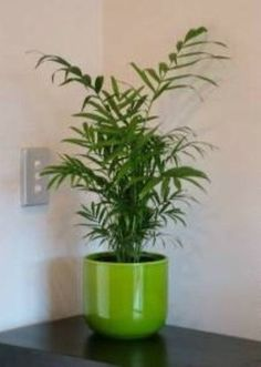1000 Images About Plant Things Group 1 On Pinterest Palms Kentia Palm And Houseplant