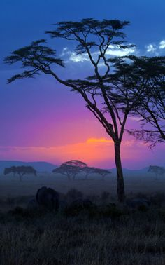 bet you would never expect a sunrise or sunset in Africa! This is south Africa. All of the animals are here! There's elephants, zebras, lions and other animals probably all staying here! Don't get closeup to the lions. Beautiful Sunset, Beautiful World, Beautiful Places, Simply Beautiful, Beautiful Scenery, Absolutely Gorgeous, All Nature, Amazing Nature, Beautiful Photos Of Nature