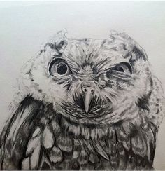 This is an 18x24 drawing of a screech owl. First super detailed/realistic owl Ive done. Hope you like him. My prints are high quality, archival