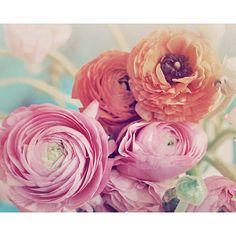Flower Photography Ranunculus Bouquet Shabby Chic  by ellemoss