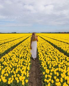 This amazing yellow tulip field is located in Eiland Goeree Overflakkee in the Netherlands. Tulip Fields, Yellow Tulips, Life Is Beautiful, Netherlands, Holland, Memories, Spring, Amazing, Pretty