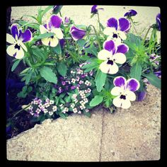 It's all about the little things in life.....Violas in my garden!