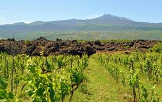 Etna Fumes and Spews, but the Winemaking Goes On - NYTimes.com