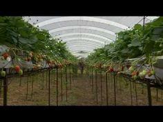 Die Brennessel - Geheimnisvolle Pflanzen - Doku