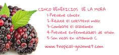 CINCO BENEFICIOS DE LA MORA www.tropical-gourmet.com