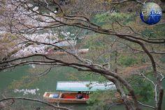 Japan. Photo by Klaudia Czarlińska. #japonia #japan #czarlińska #cspa #wakacje #holiday #travel #podróż #pink #blossom #azja #asia #日本 #sky #natura #nature #tree #nature #natura #pink #spring #cherryblossom #hanami #flowers #park #asian #japanese #boat #river #people #lofifilter #romantic #fabulous