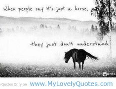 equestrian quotes | People say its just a horse - quotes on horses - My Lovely Quotes