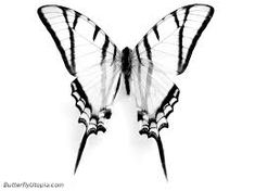 Image result for how to draw a butterfly step by step realistically