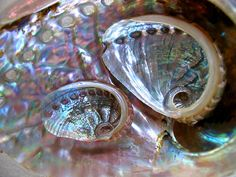❥ abalone shell..although not a crystal..has special properties like a crystal