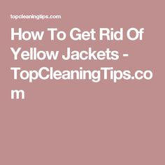 How To Get Rid Of Yellow Jackets - TopCleaningTips.com