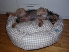 Dixon on a Donut Bed #happydog #dog