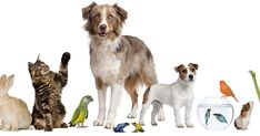 Pets Nowadays there is a desire among many to raise pets at home, so. Best Picture For Rodents lo Types Of Animals, Types Of Dogs, Cute Animals, Most Beautiful Pictures, Cool Pictures, Siamese Fighting Fish, Owning A Cat, Types Of Fish, Beautiful Fish