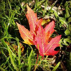Mooie kleur, kleur van de liefde in  de herfst