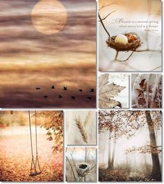 ❧ Collages de photos ❧ moodboard fall by AT Collages, Inspiration Wand, Color Inspiration, Beautiful Collage, Beautiful Beautiful, Color Collage, Jolie Photo, Fall Halloween, Mood Boards