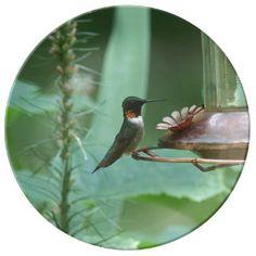 Hummingbird, Porcelain Plate. Porcelain Plate