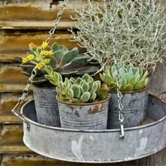 Basket of goodies: Upcycle an old tin tray and hang with clip-on chains. Complete the look with silvery succulents in metal pots - clipped from page 78 of Better Homes and Gardens, Dec 2013 issue by the Netpage app. Garden Art, Home And Garden, Cactus E Suculentas, Succulent Display, Succulent Landscaping, Better Homes And Gardens, Cacti And Succulents, Air Plants, Garden Projects