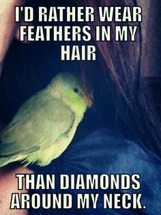 53 Ideas Cute Bird Quotes Feathers For 2019 Parrot Quotes, Bird Quotes, Bird Sayings, Bird Mom, Crazy Bird, Bird Lady, Funny Birds, Cute Birds, Feathered Dinosaurs