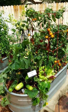 This is a great DIY for starting a container veggie garden Explains everything Metal trough used as container for vegetable garden cucumbers tomatoes herbs and more Food. Backyard Vegetable Gardens, Vegetable Garden Design, Garden Landscaping, Apartment Vegetable Garden, Small Tomato Garden Ideas, Apartment Gardening, Landscaping Ideas, Patio Ideas, Gardening For Beginners