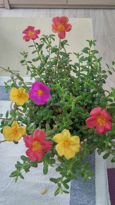 Portulaca Flowers, Portulaca Grandiflora, Planting Flowers, House Plants Decor, Plant Decor, Good Morning Flowers, Backyard Landscaping, Garden Inspiration, Cactus Plants