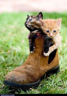 Very interesting post: TOP 56 Funny Cats and Kittens Pictures.сom lot of interesting things on Funny Animals, Funny Cat. Cute Baby Animals, Animals And Pets, Funny Animals, Wild Animals, Cute Kittens, Cats And Kittens, Orange Kittens, Kittens Playing, Baby Kittens