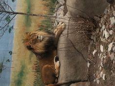 Syracuse zoo