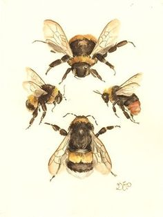 """The Flight of the Bumblebee 6""""x8"""" watercolor on paper A…"""