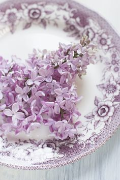Lilac Flowers on a Lilac & White Transferware Plate . Purple Love, Purple Lilac, All Things Purple, Shades Of Purple, Purple Flowers, Lilac Tree, Periwinkle, Lavender Cottage, Lavender Blue