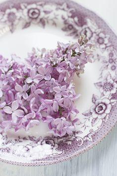 pretty plate of lavender