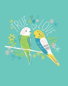 True love - lizzie mackay pretty in 2019 bird art, cute illu Sketch Manga, Bird Illustration, Budgies, Kids Prints, Bird Art, Bird Feathers, Cute Art, Illustrations Posters, True Love