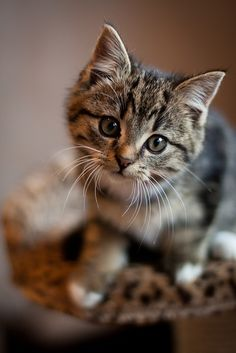 """""""Cats, as you know, are quite impervious to threats."""" -- Connie Willis, To Say Nothing of the Dog"""