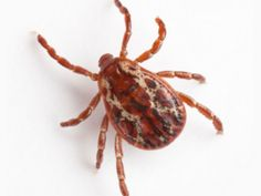 How to keep ticks out of your garden and off of you