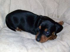This is what Lily looked like as a puppy.