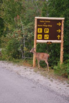 MacGregor Point Provincial Park- We found deer Ontario Parks, Creative Storage, Places Ive Been, Classroom Ideas, Deer, Places To Visit, Camping, Explore, Adventure