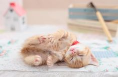 23+ Cutest Tiny Cats That You Will Love #cute #kittens #kitty #cat