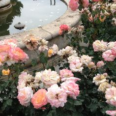 I would love a fountain surrounded by roses in the middle of a garden