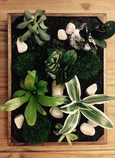 Jardin à la Japonaise, plantes grasses, plantes d'intérieur. Plateau Botanique ☘️