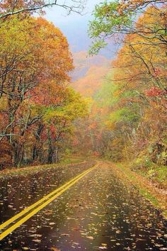 Fall foliage color on the Blue Ridge Parkway near Asheville, North Carolina. See the mountain fall leaf forecast at www. Foto Nature, All Nature, Blue Ridge Parkway, Beautiful World, Beautiful Places, Beautiful Roads, Beautiful Scenery, Simply Beautiful, Asheville North Carolina