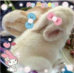 小っちゃくてフワフワのウサギちゃん♡  見ているだけで癒されますね♡  みんなのかわいいペットの写真もKawaii★Camで自慢しちゃおう!   Small and fluffy bunnies♡  Just looking at the picture makes me happy ♡  Share pictures of your pets on Kawaii★Cam and let us know how cute they are!   Photo taken by GustJellon Kawaii★Cam   Join Kawaii★Cam now :)   For iOS:   https://www.kwcam.co   For Android :   https://play.google.com/store/apps/details?id=jp.co.aitia.whatifcamera    Follow me on Twitter :)   https://twitter.com/WhatIfCamera    Follow me on…