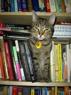 """""""This is a library, not a dive bar."""" 