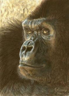 Color pencil drawing of a gorilla...