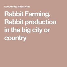 Rabbit Farming. Rabbit production in the big city or country