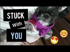 Stuck With You [feat. Lexus the Shihtzu] - YouTube Pets, Youtube, Youtubers, Youtube Movies, Animals And Pets