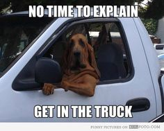 """Get in the truck - Funny dog sitting behind the wheel of a truck: """"No time to explain, get in the truck!"""""""