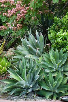 Image result for agave in spain pinterest
