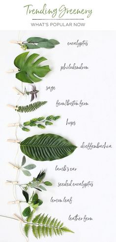 Greenery is on trend! Decorate your home and fill your wedding bouquets and centerpieces with artificial leaves from Afloral.com, including eucalyptus, tropical leaves, ferns, hops and more.