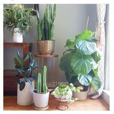 Well isn't this just the happiest little corner you've ever seen!  Thanks for sharing @the_decor_adobe!  #vrplantweek